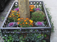 street-plantings-med