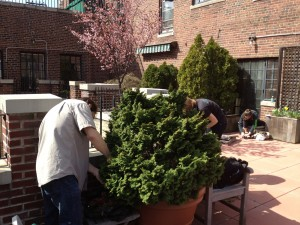 planting shrubs and trees on a rooftop in New York City