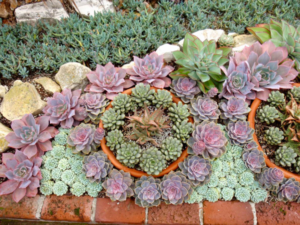 Best Xeriscape Designs
