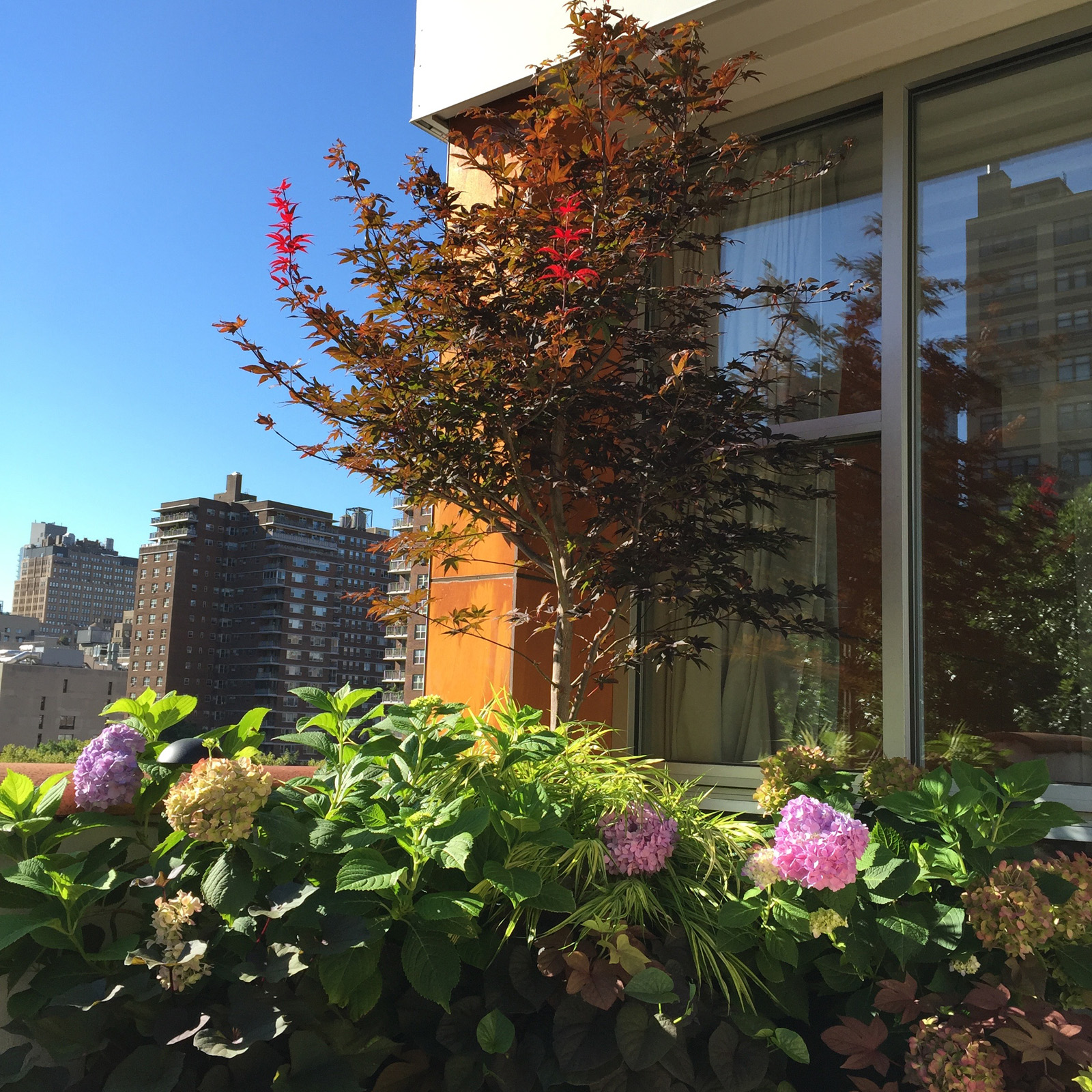 Japanese Maple Tree In Bloom On A Rooftop Garden Designed By All Decked Out  NYC