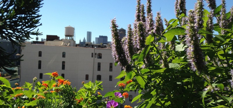 Spring flowers blooming on a rooftop terrace in New York City,