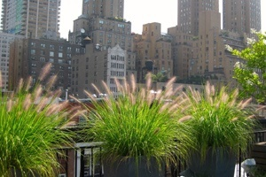 All Decked Out Nyc Rooftop Deck Builder Amp Landscaper