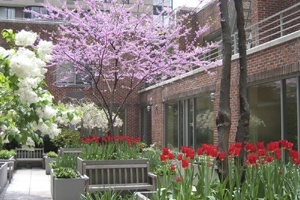 A thumbnail picture of a garden in bloom in springtime in New York City