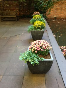 courtyard-fall-plants-sm