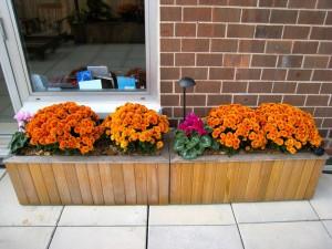 fall-planter-sm