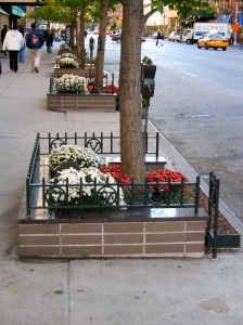 street-planting-fall