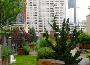 xeriscape-rooftop-garden-1
