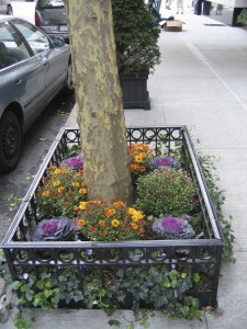 seasonal planting 24
