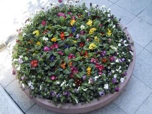 seasonal planting 21