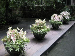 seasonal planting 9