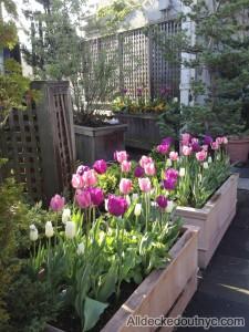 seasonal planting 19