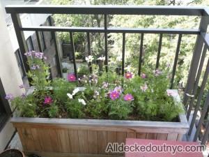 seasonal planting 17