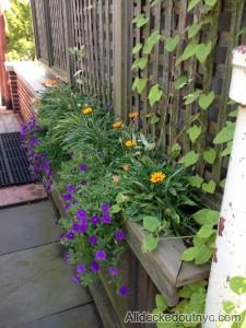 seasonal planting 16