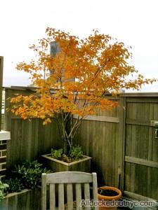 seasonal planting 15