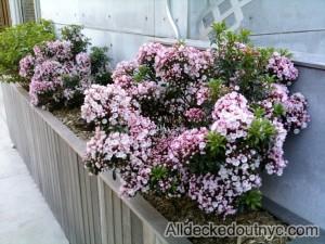 seasonal planting 13