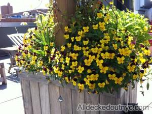 seasonal planting 12