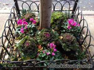 seasonal planting 1