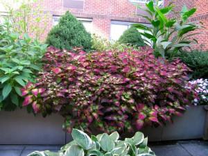 seasonal planting 7