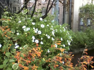 seasonal planting 4