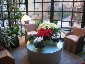 festive-plants