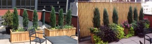 privacy-fence-before-after