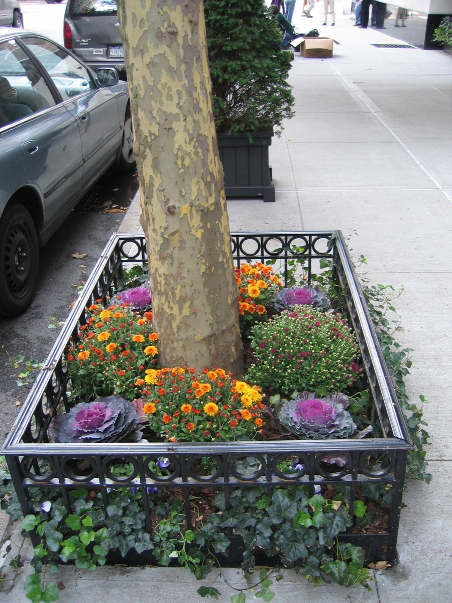 Urban Foundation Plantings Amp Tree Pits All Decked Out