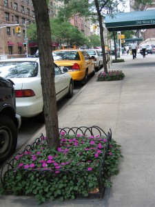 Tree planted on NYC street 18