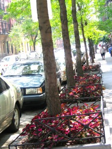 Tree planted on NYC street 17