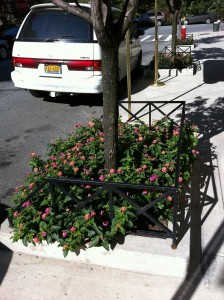 Tree planted on NYC street 10