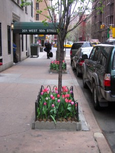 Tree planted on NYC street 2