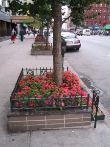 Tree planted on NYC street 1