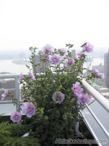 nyc-urbanscape-garden-138