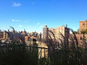 nyc-urbanscape-garden-137