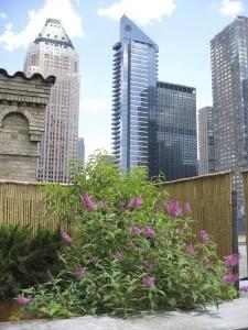 nyc-urbanscape-garden-15
