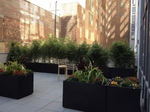 nyc-urbanscape-garden-1                  nyc-urbanscape-garden-11
