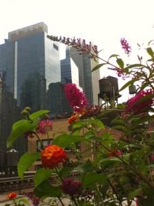 nyc-urbanscape-garden-10