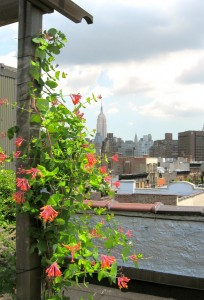 nyc-urbanscape-garden-11