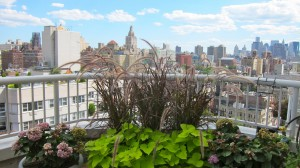 nyc-urbanscape-garden-14