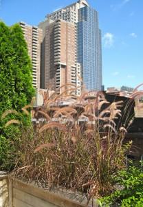 nyc-urbanscape-garden-6