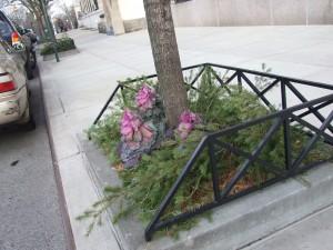 street-planting-winter