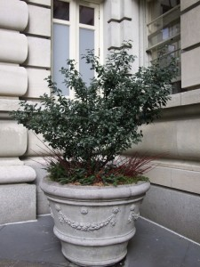 winter-potted-plant